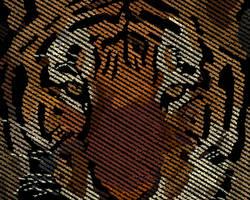 Type: Tiger by slowboyazn