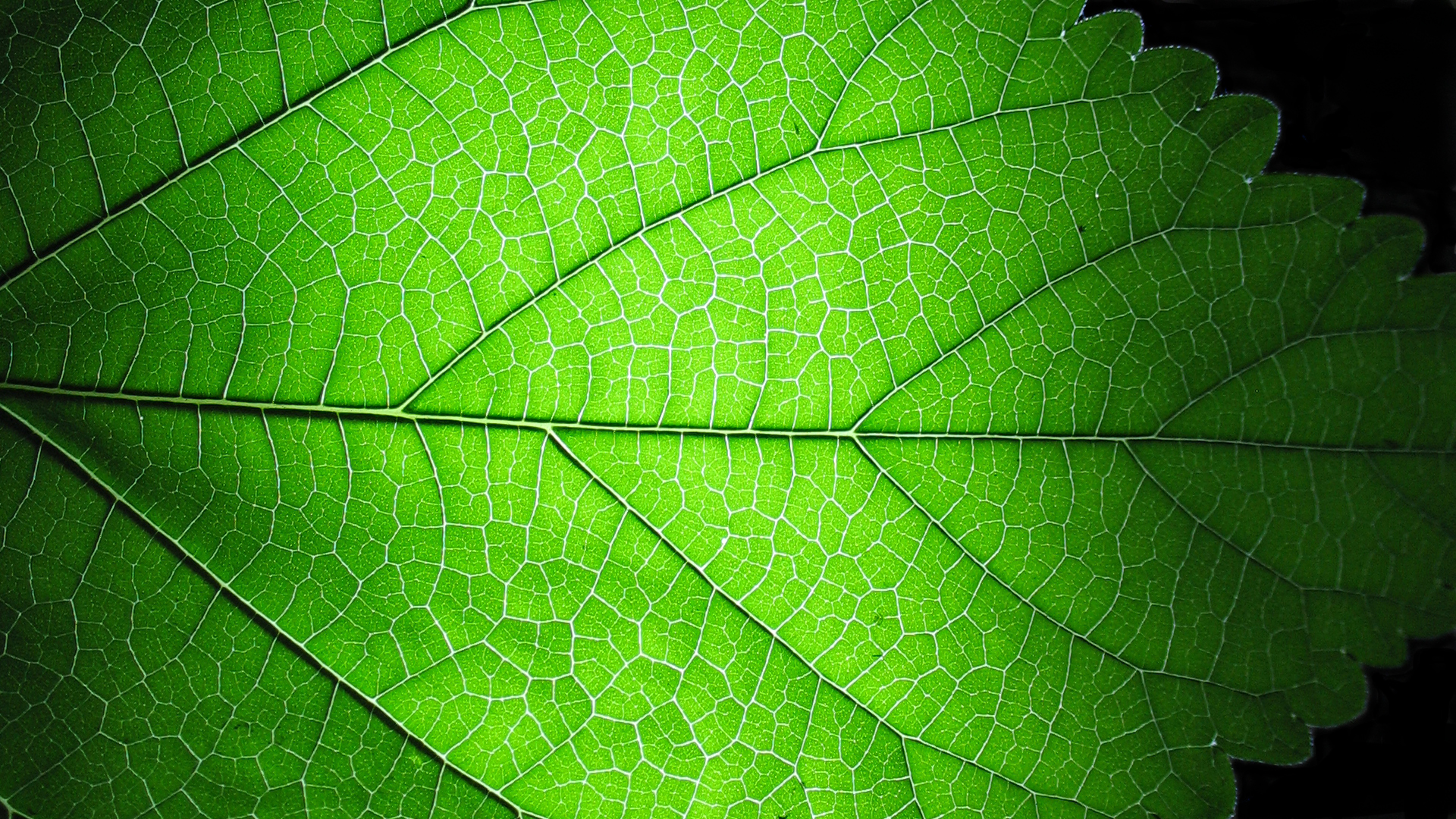 Leaf structure ver 2 by endprocess83 on deviantart for Structure photography