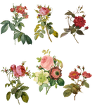 1700-1800's Roses PNG