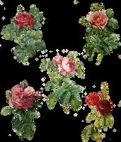 Rose Set (5) PNG by chaseandlinda