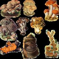 Fungi Mushroom 1 PNG by chaseandlinda