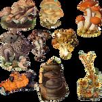 Fungi Mushroom 1 PNG