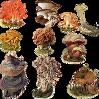 Fungi Mushroom 2 PNG by chaseandlinda