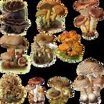 Fungi Mushroom 4 PNG