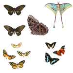 1800's Insects 28 PNG