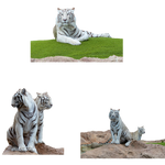 White-Bengal-Tigers-PNG