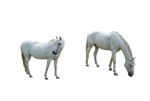 2-White-Horses-PNG