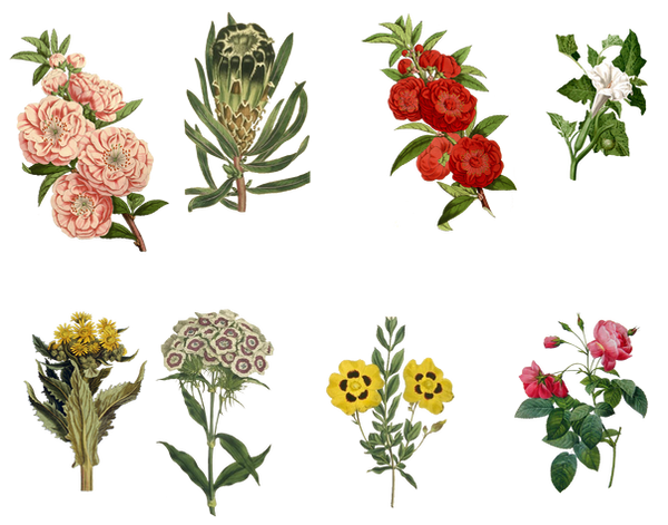 Vintage Flowers Set 3 ...