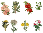 Vintage Flowers Set 3 PNG