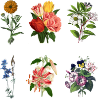 Mix_Flowers_3_PNG by chaseandlinda