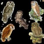 Vintage Owls Png