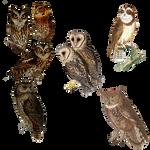 Vintage Owls 3 Png