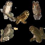 Vintage Owls 4 Png