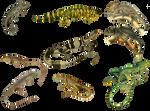 Reptiles 4 PNG