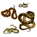 Snakes 3 PNG