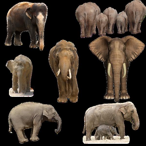 Elephants PNG by chaseandlinda