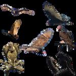 Vultures 2 PNG