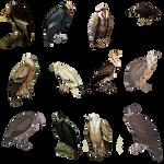 Vintage Vultures PNG