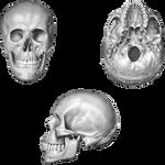 Skull Set PNG