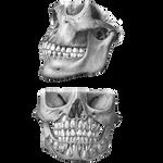 Skulls 3 PNG