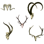 SkullHeads2 PNG