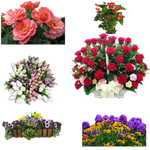 Flowers2PNG