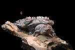 Alligator-PNG