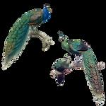 Peacocks Illustrations PNG