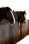 Stable Horses PNG
