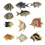 Variety Of Fishes PNG