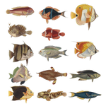 Variety Of Fishes 2 PNG