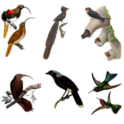 Variety of Birds PNG by chaseandlinda