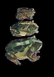 Vintage Frog Drawings PNG