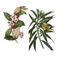 Variety of 1800's Flowers 3 PNG