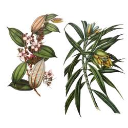 Variety of 1800's Flowers 3 PNG by chaseandlinda
