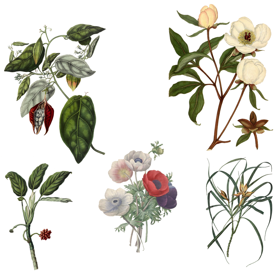 Variety of 1800's Flowers 4 PNG by chaseandlinda