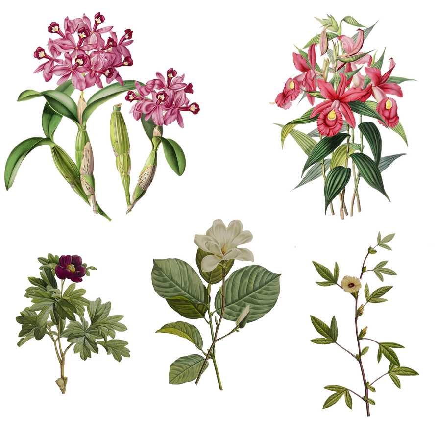 Variety of 1800's Flowers 6 PNG by chaseandlinda
