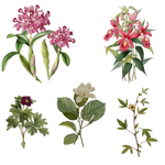 Variety of 1800's Flowers 6 PNG