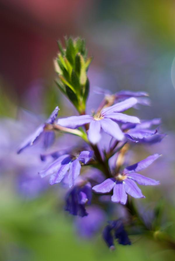 Flower by Ashiwa666