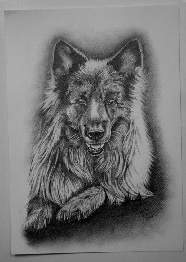 Dog portrait by Ashiwa666