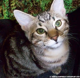 Kitty Kitty Kitten by DigitalVampire107