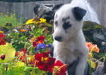 Flower Dog by birchgirl