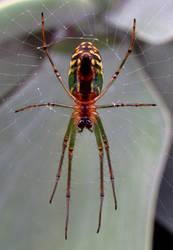 Spider - closeup