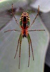 Spider - closeup
