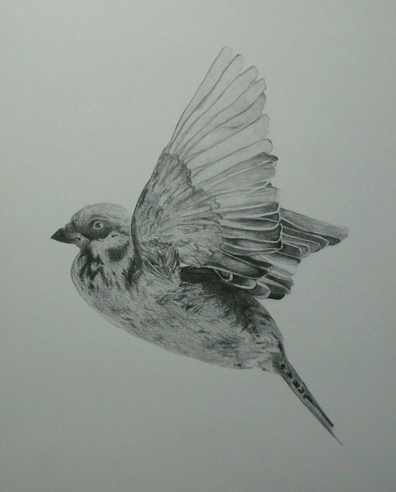Sparrow 1 by burilka