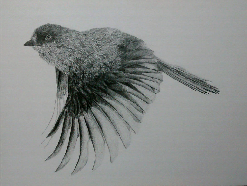 Sparrow 2 by burilka