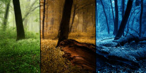 Forest of different seasons
