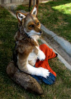 Coyote resting by FeralFacade