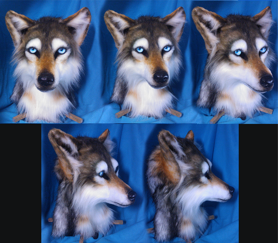 Wolf Head by Eddie-Ka
