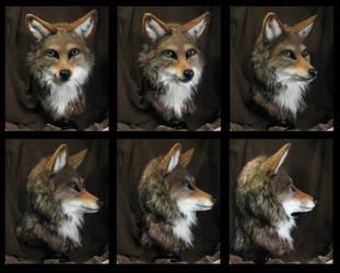Coyote by FeralFacade